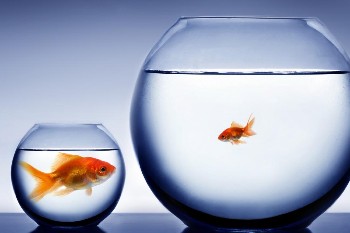Big-fish-small-pond-shutterstock_8451121-1200x800.jpg